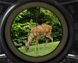Deer in Scope