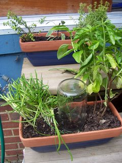 Herbs in window boxes