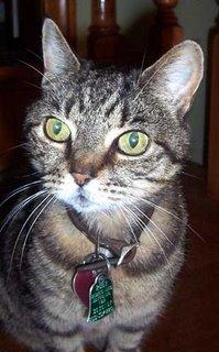 Sicily Kitty