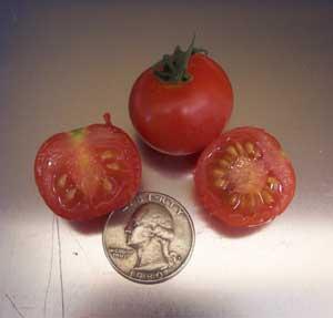Tonadose Des Conores Tomatoes