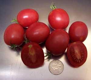 God Love Tomato