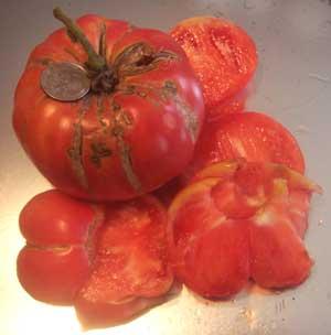 Bear Claw Tomato