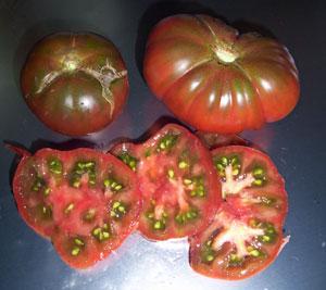 black from tula tomato