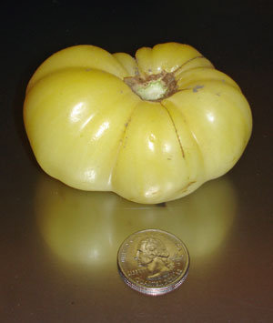 white tomesol tomato